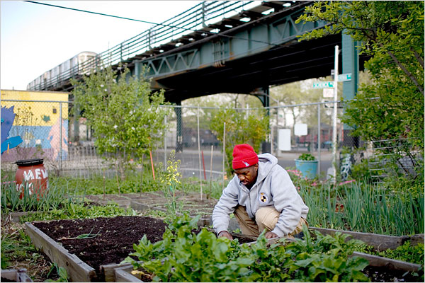 Added Value/Red Hook Community Farm