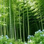 Weekly Eco-Tip (September 4/5, 2010)